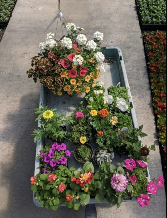 Madison Jennings planted flowers